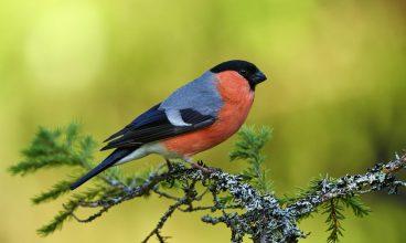 Întoarcerea păsărilor de la iernat, sărbătorită în Parcul Național Retezat